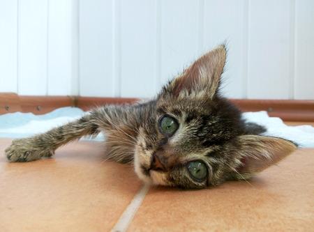 Le petit chat malade avec des yeux expressifs gisant sur le sol.