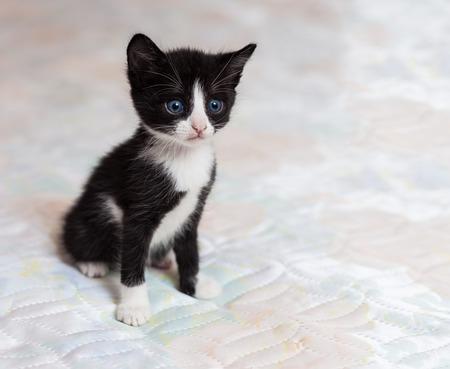 The small black-white kitten on a white background Stock Photo