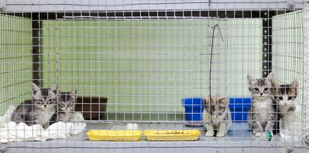 orphaned: Five kittens in a cage at the animal shelter Stock Photo