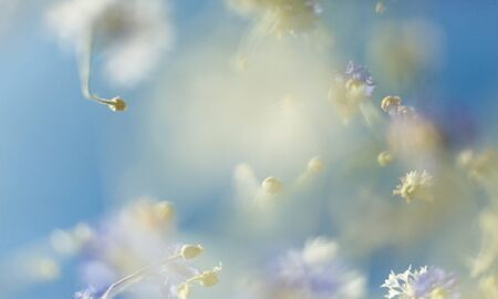 Beautiful flowers. Abstract blurred blue nature background Illustration