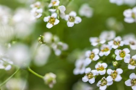 White little flowers Stock Photo