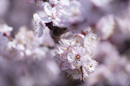 The slightly blurred beautiful apricot white flowers Stock fotó