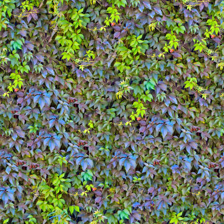 Seamless green leaves background cover a wall