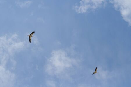Two storks in the sky Stock Photo