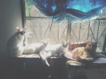 gang: Gatos pandilla mostrando cerca de ventanas soleadas.