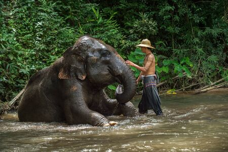 mahout: CHIANGMAI THAILAND  AUG 2014: Mahout showering asia elephant in the camp after finish tourist service. Editorial