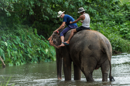 mahout: CHIANGMAI THAILAND  AUG 2014: Tourist riding and learning to control asia elephants with mahout teacher in the river.