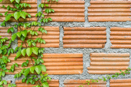 squalid: grunge brick texture with green Ornamental climbing plants,Abstract background,Loft modern style wallpaper.