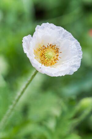 花びら: Beautiful white flower petals overlapping 写真素材