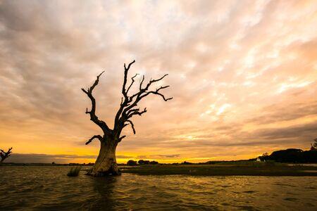 Arbre mort solitaire sous le coucher du soleil du soir. Arbre mort dans le lac.