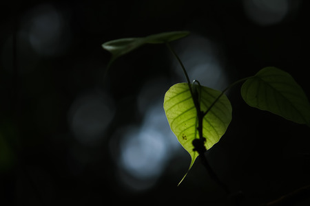 nature green: Hoja verde de la naturaleza. Hoja verde en fondo oscuro. Foto de archivo