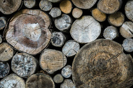 timber cutting: Dry timber log stacked as background. Logs cross cuts on the timber cutting. Stock Photo