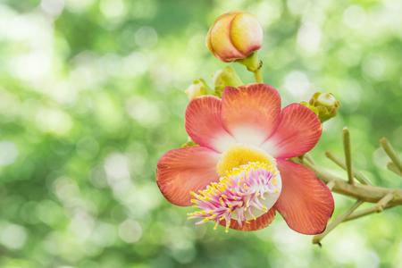花びら: Beautiful orange flower petals overlapping.