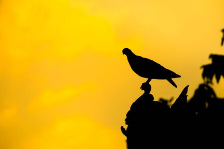 black feathered: Silhouette of bird on the top of roof.