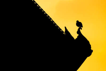 standstill: Silhouette of bird on the top of roof.