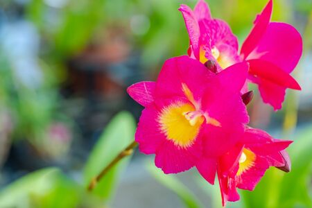 Beautiful orchid flower Close up