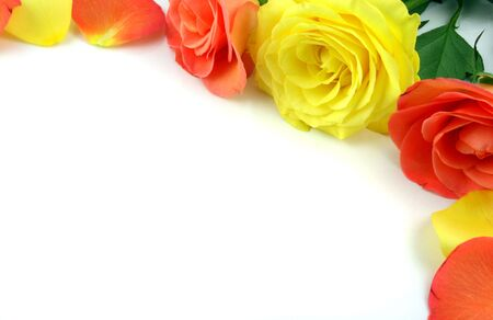 Flowers Isolated on white - Ideal Border or Background Banco de Imagens - 819439
