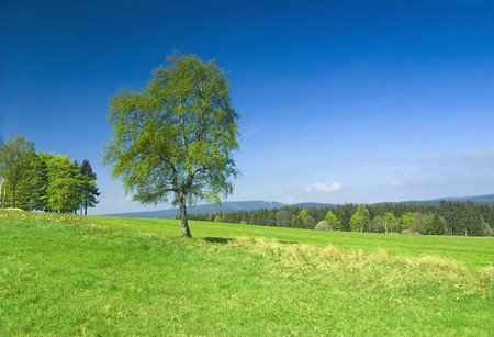 Meadow with blue clear sky. Reklamní fotografie