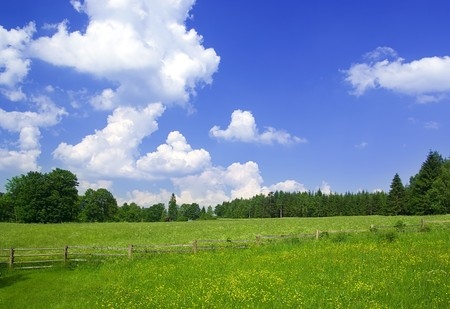 Panorama photo of meadow in sunny day. Reklamní fotografie