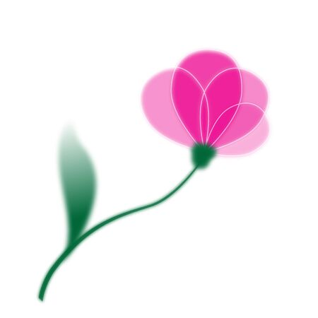 tulips isolated on white background: Pink single flower