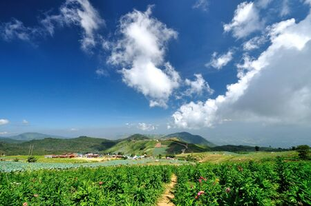 Blue sky with starw flower plantation