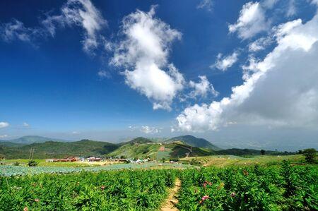 Blue sky with starw flower plantation Stock Photo - 16608736