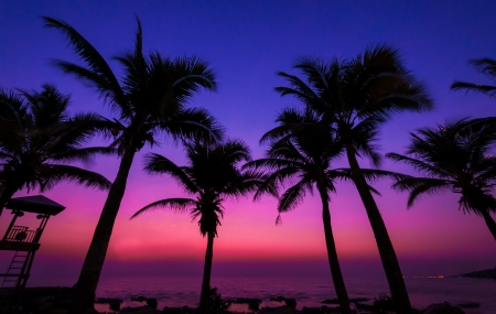 Coconut tree silhouette on paradise sunset, twilight on the beach