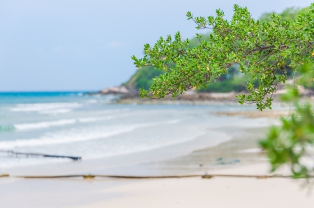 tree branch over the beautiful beach