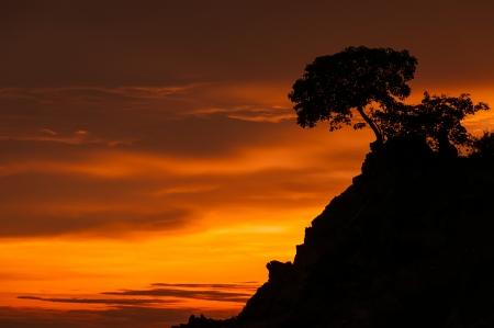 Beautiful tree at sunrise on the beach