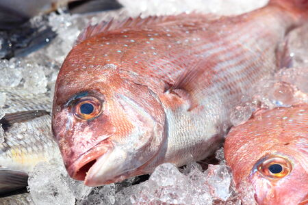 Sea bream Foto de archivo
