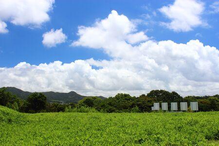 A green field photo