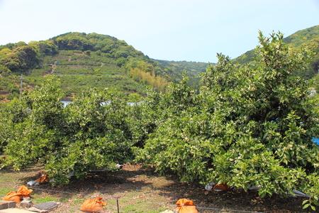 fruit tree: Fruit tree Stock Photo