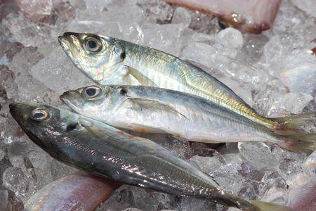 fish on ice: Horse mackerel