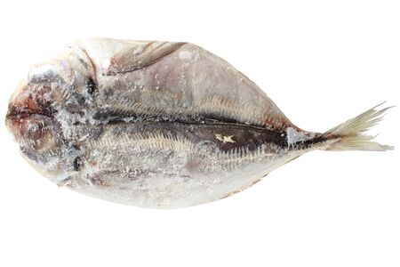 living things: Horse mackerel