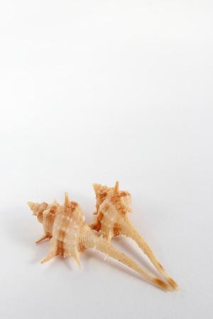 small articles: Seashell Stock Photo