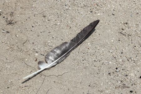 be missing: Feather