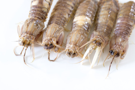 Boiled mantis crab