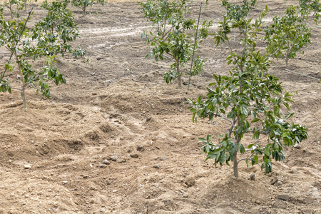 Seedlings planted in a wasteland