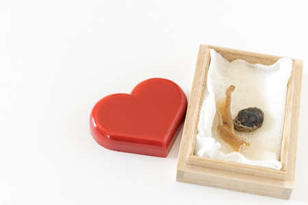 Heart figurine and umbilical cord in a wooden box Banco de Imagens