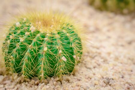 small cactus in the sand beautiful.