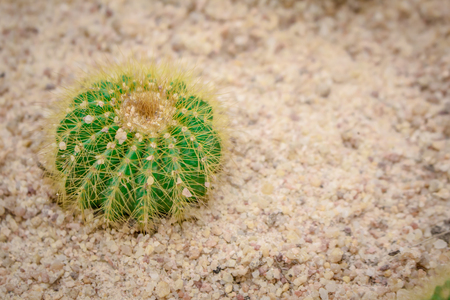 occur: Cactus small trees occur on land in the fertile.