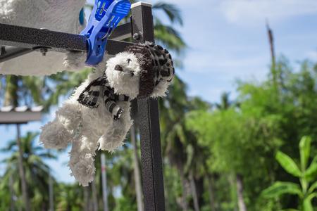 Teddy bear hanging on the towel rack is sunlight.