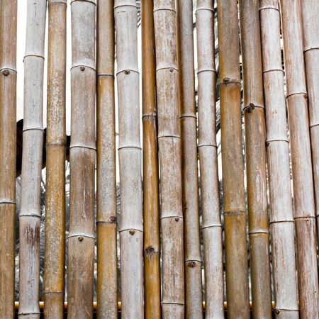 bough: Background and pattern of the old bamboo fence line.