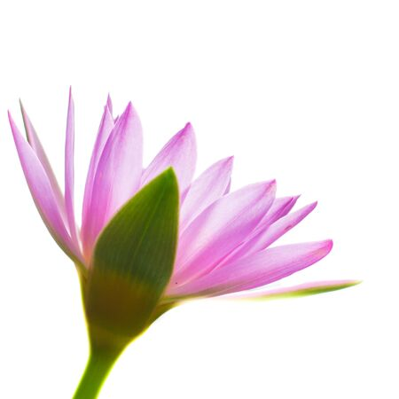 breezy: Colorful of a lotus blooming in the early seasons of nature.