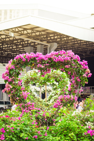 Bougainvillea garden at the heart shaped Valentines Day. Stock Photo