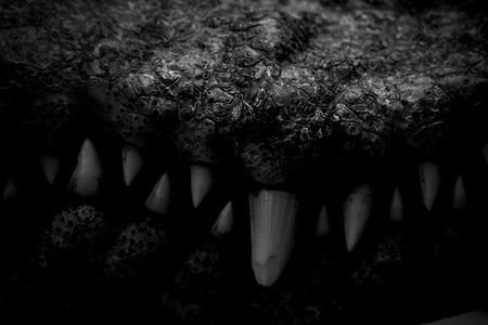 Bouche sombre du chasseur de crocodile dans la cage avec des crocs acérés et effrayant. Banque d'images - 83540794