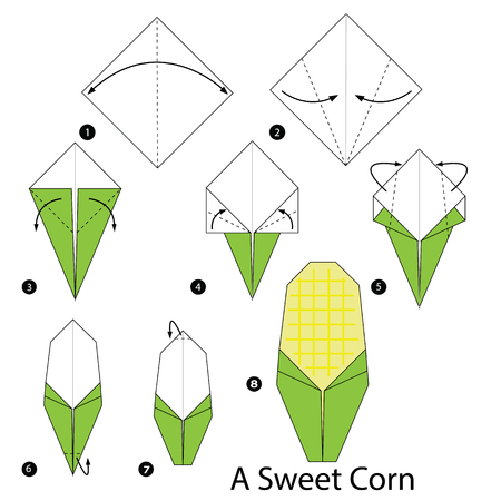 sweet corn: step by step instructions how to make origami a Sweet Corn. Illustration