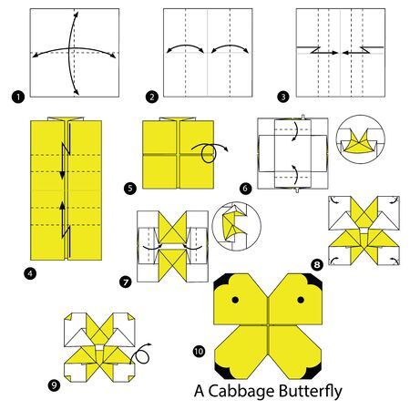 Step by step instructions how to make origami. A cabbage butterfly illustration.