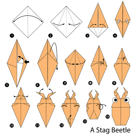 step by step instructions how to make origami A Stag Beetle Stock Illustratie