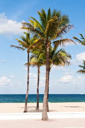 Many Palm trees in the Fort Lauderdale beach, Miami, Florida with the ocean in front of them photo
